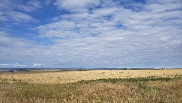Hansen Land Brokers - Land For Sale - 475 acres mile west of claresholm