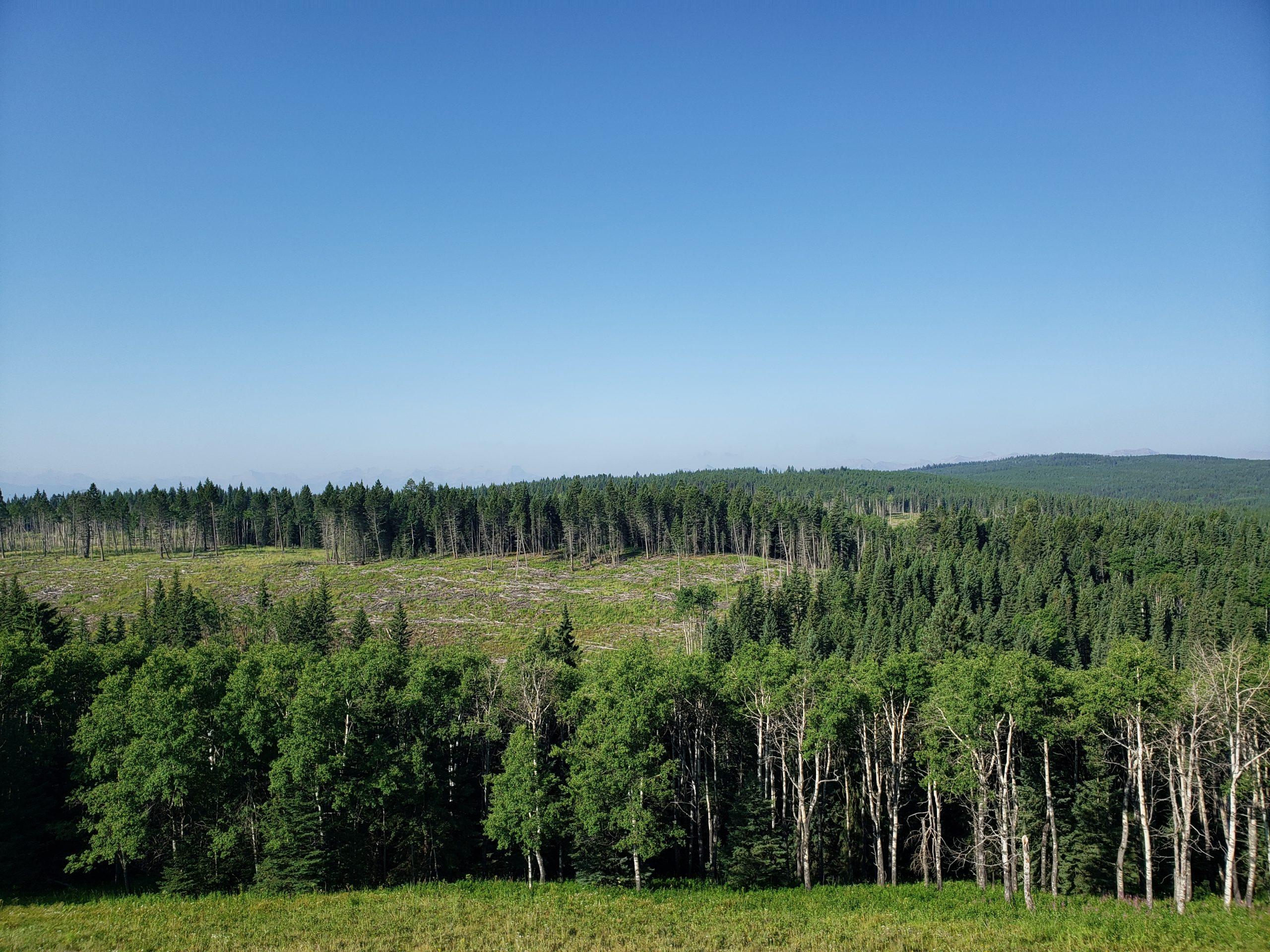 Southern Alberta's Porcupine Hills
