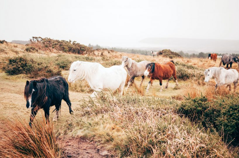 Hansen Land Brokers - Things to Consider Before Buying a Ranch
