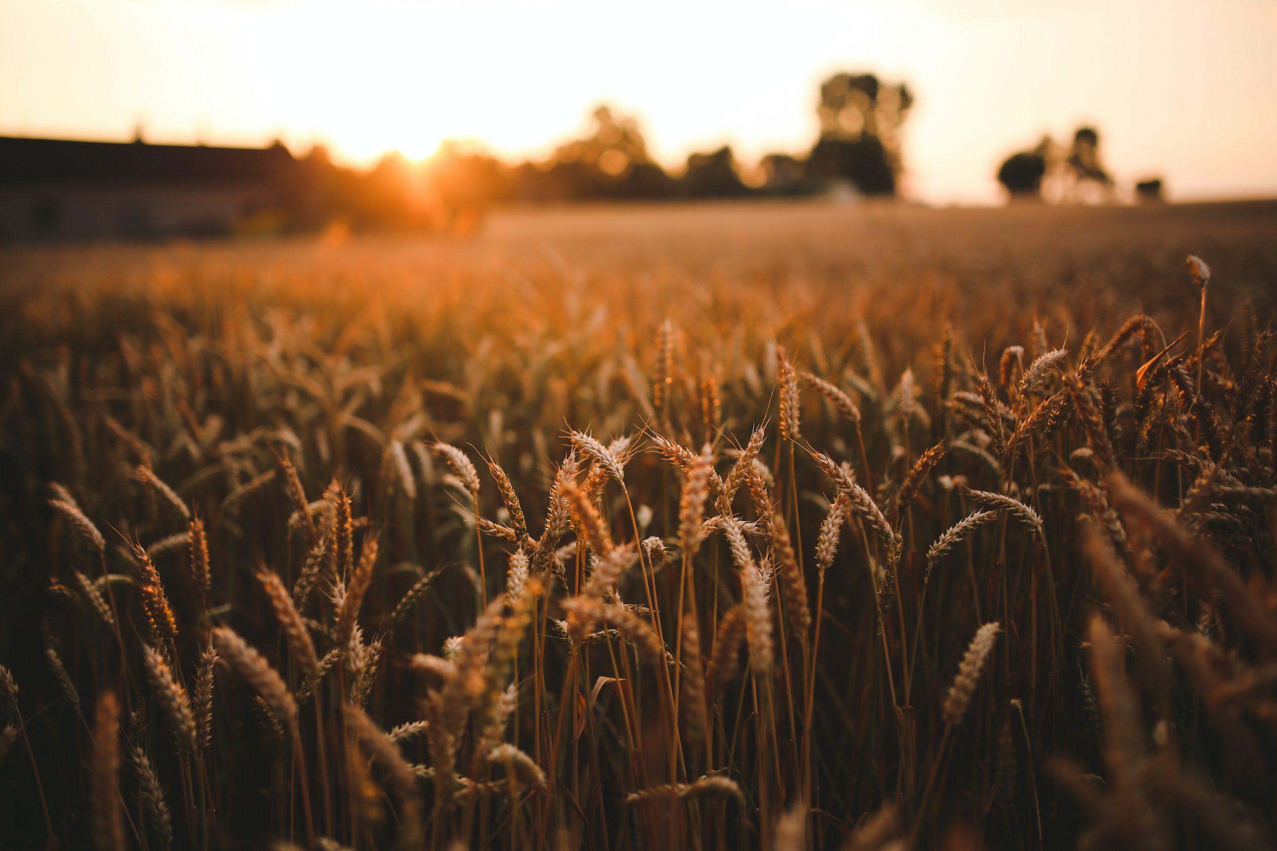 Hansen Land - Alberta Agriculture