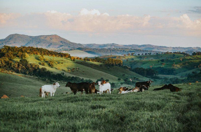 Hansen Land - Ranching In Alberta
