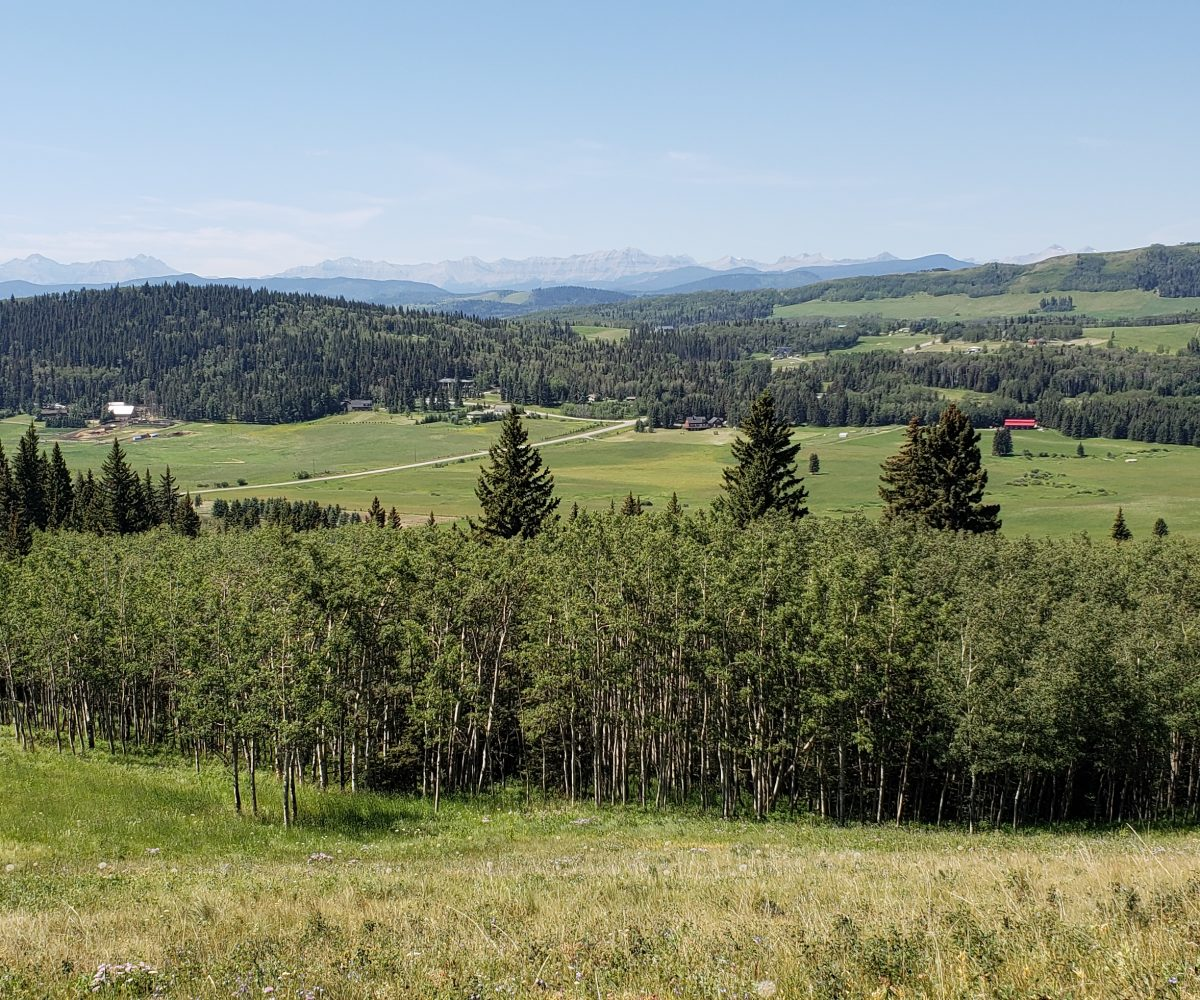 Land For Sale - 160 Acres South West of Priddis 2
