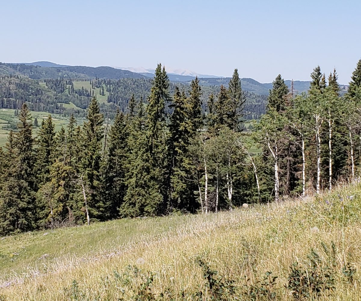 Land For Sale - 160 Acres South West of Priddis 4