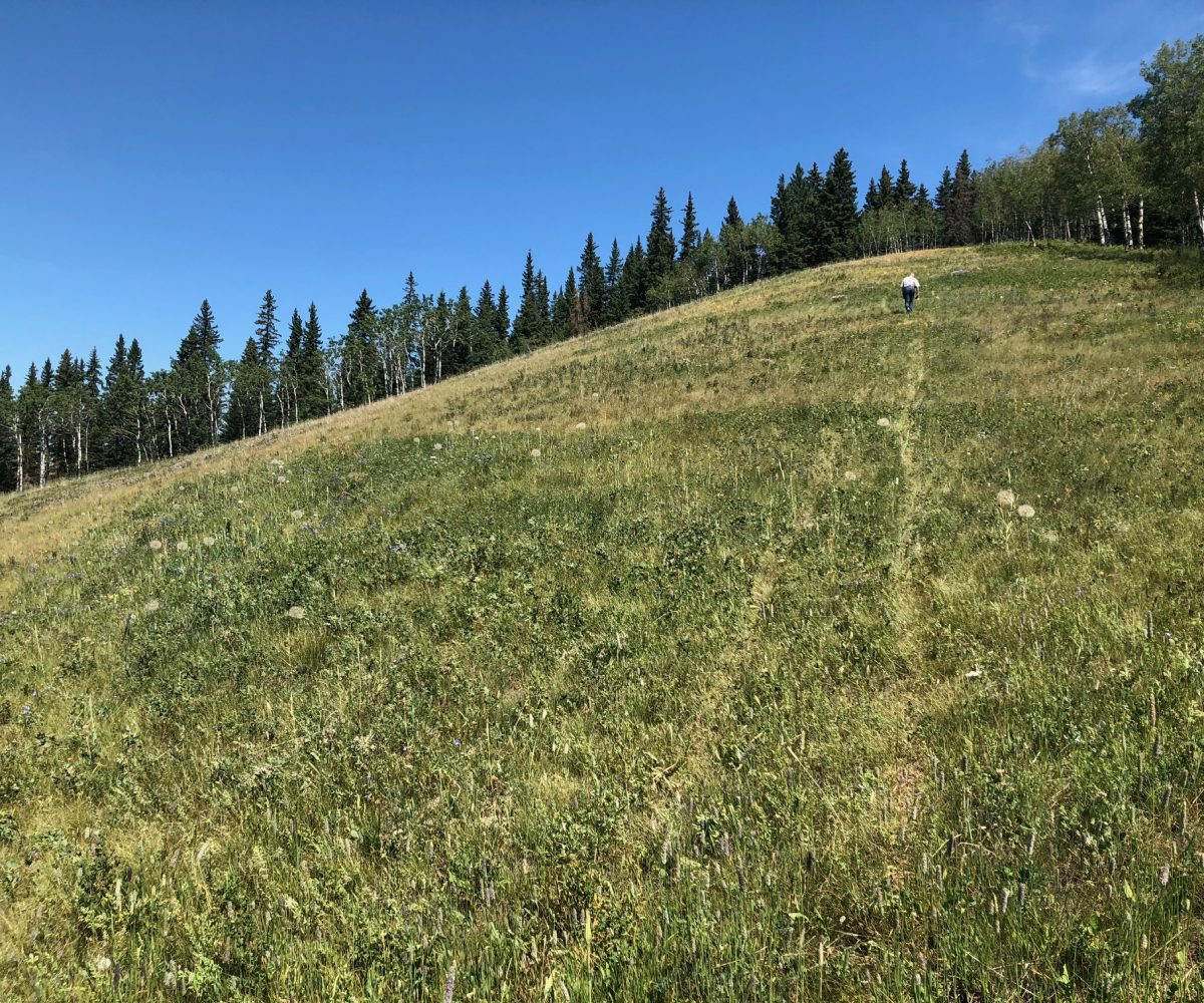 Land For Sale - 160 Acres South West of Priddis 6