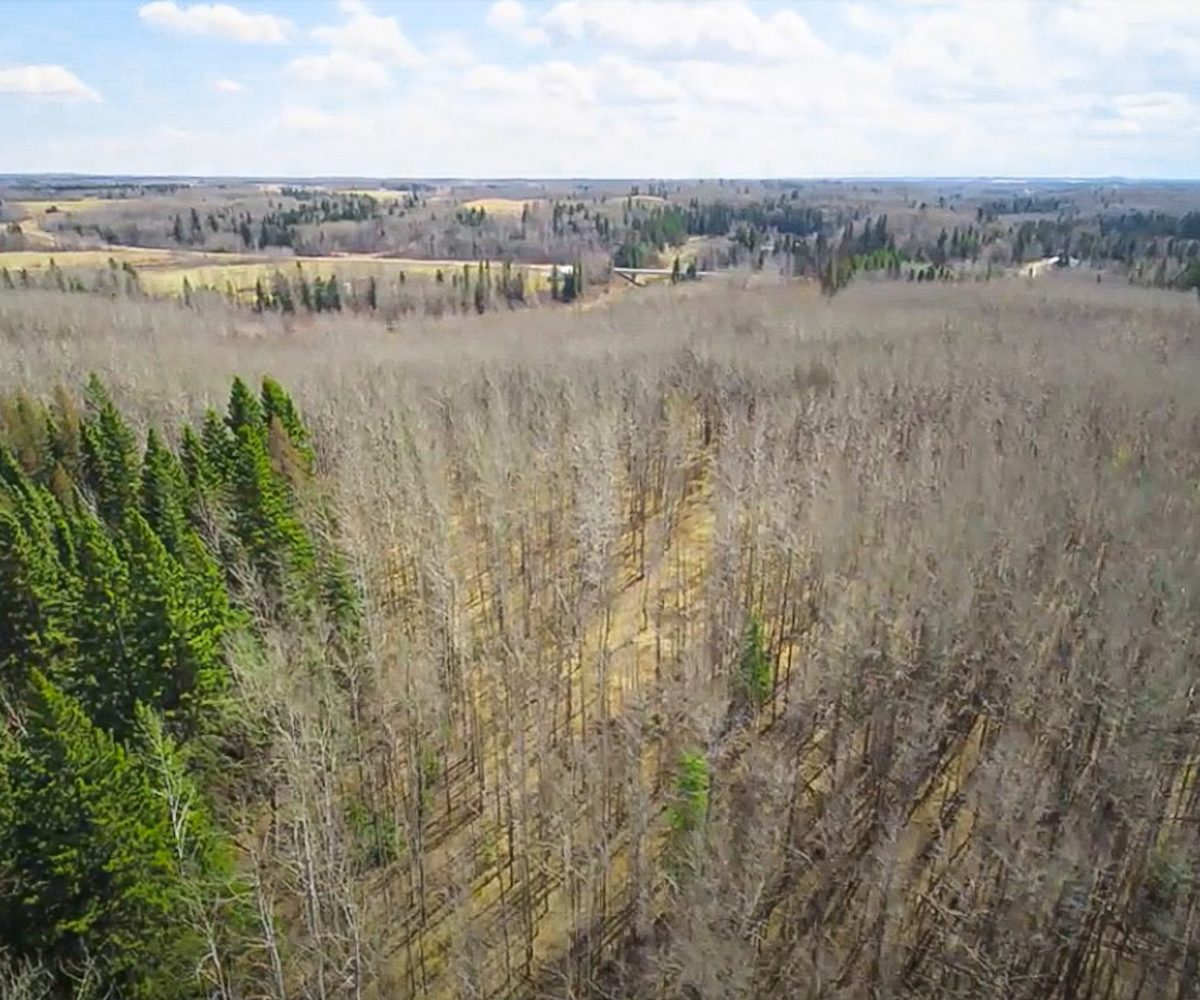 173 Acres - Birchwood County Land For Sale 4