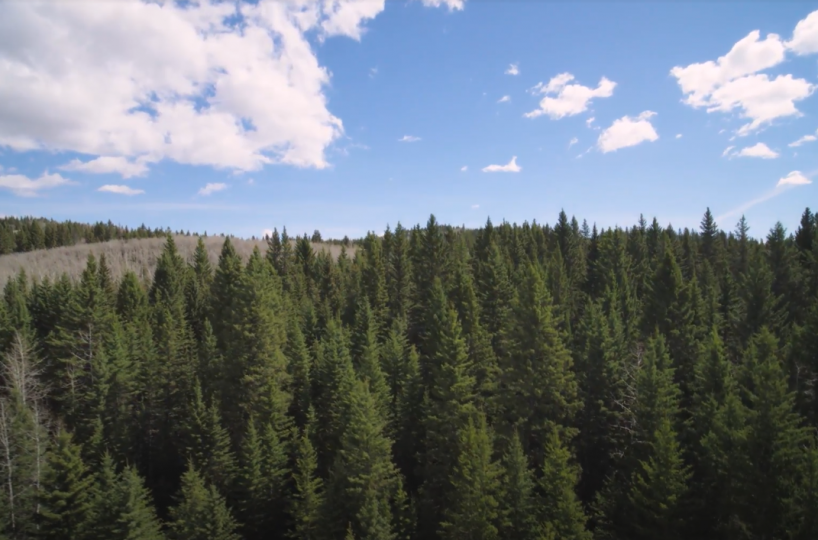 Land For Sale - 160 Acres South West of Priddis 11