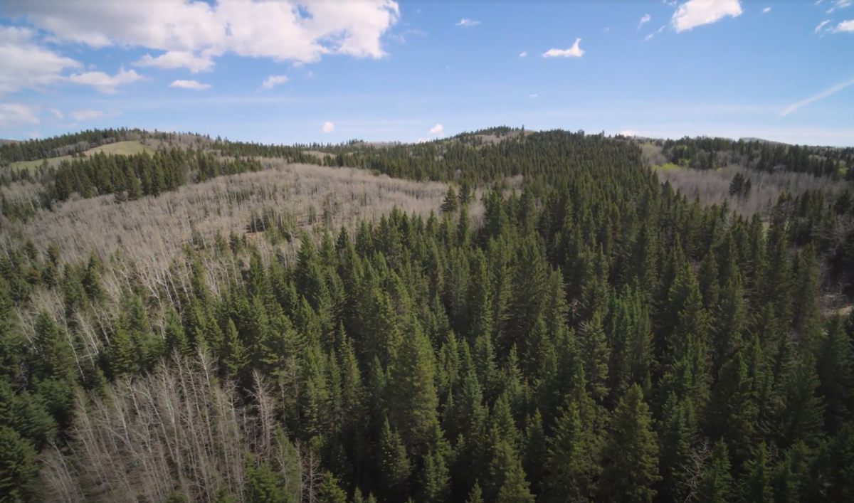 Land For Sale - 160 Acres South West of Priddis 12