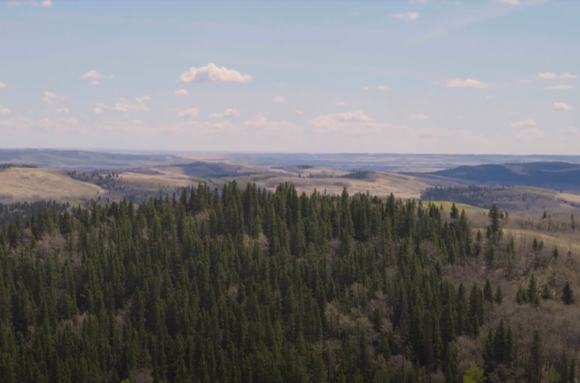 Land For Sale - 160 Acres South West of Priddis 14