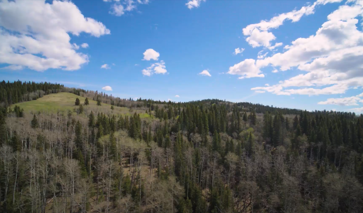 Land For Sale - 160 Acres South West of Priddis 16