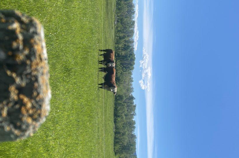 Hansen Land Brokers - Land For Sale - 481 Acres Near Waterton Lakes Park
