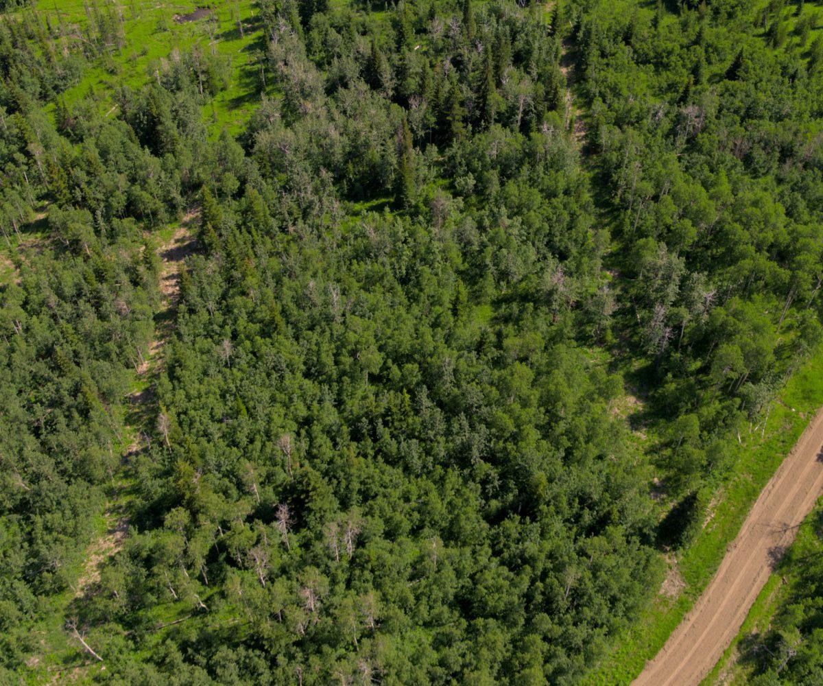 Hansen Land Brokers - Heritage Ranch Auctions - 5
