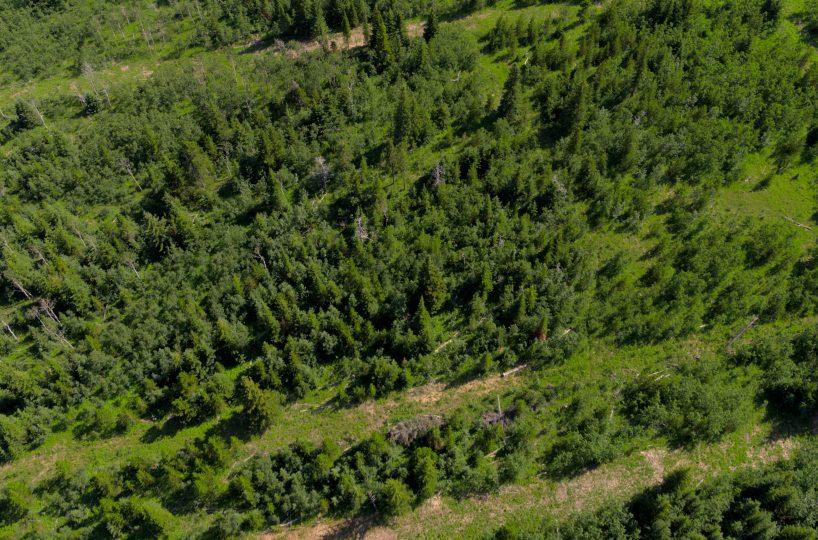 Hansen Land Brokers - Heritage Ranch Auctions - 8