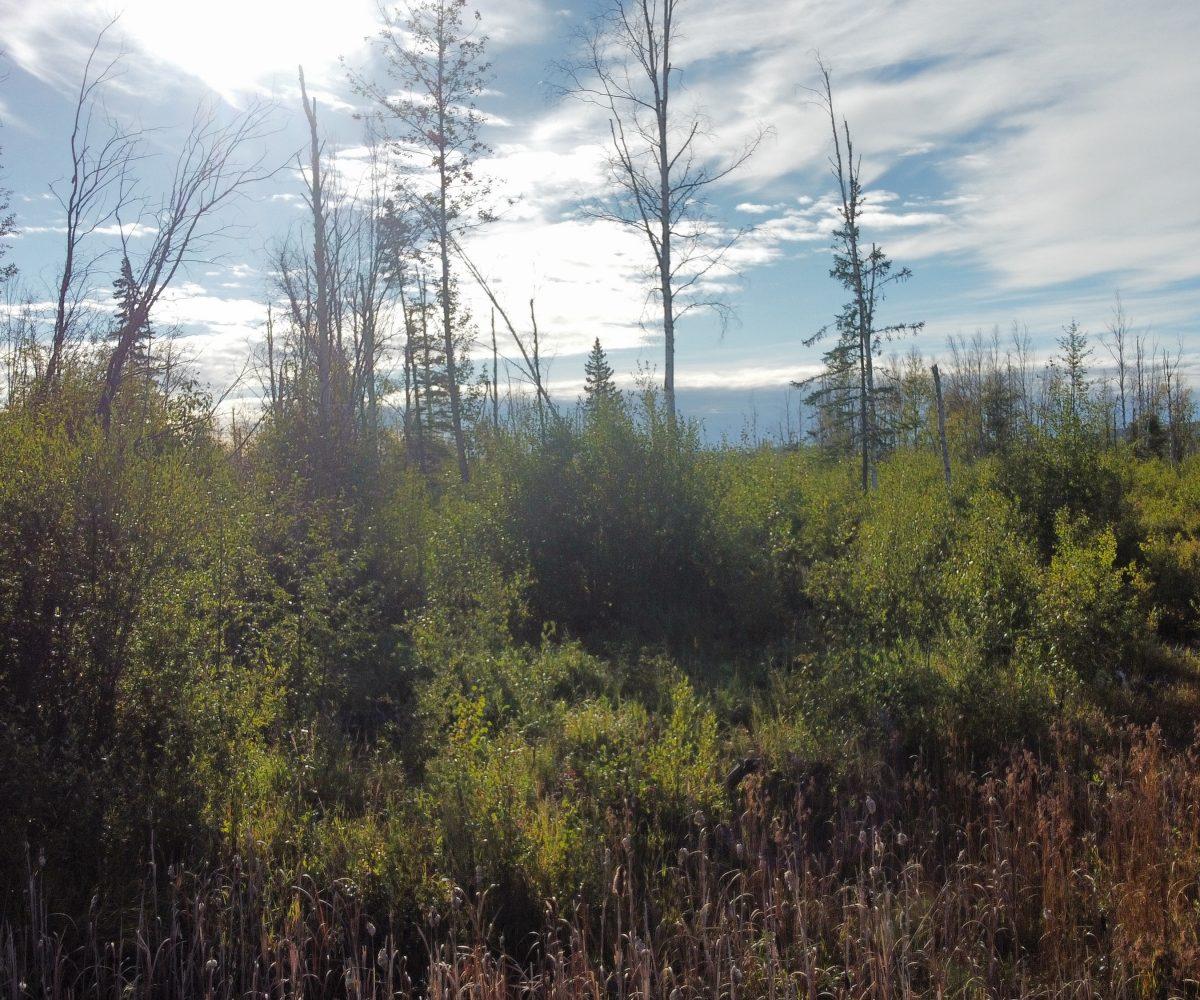 Hansen Land Brokers - 320 Acres West Of Lil Smoky - 2